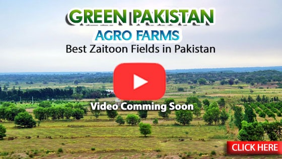 Green_Pakistan_Agro_farm__Youtube5.jpeg
