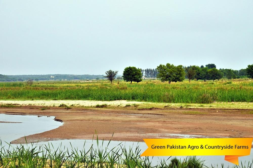 Green Pakistan Agro Farms
